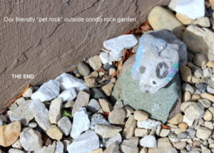 Pet rock in the condo rock garden